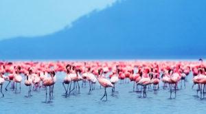 Lake Nakuru Kenya